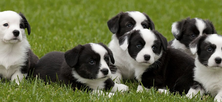 Puppies on the grass